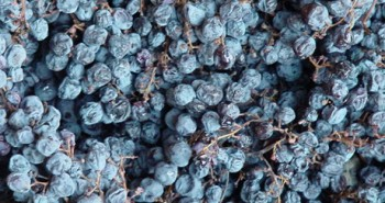 Amarone-Grapes