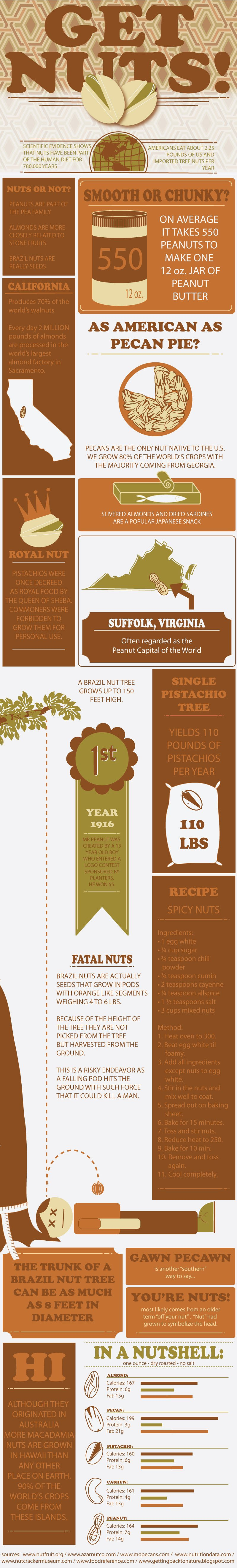 Nuts-Infographic